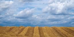 EDA - Paysage champ de blé