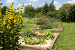 Développer l'agriculture en ville