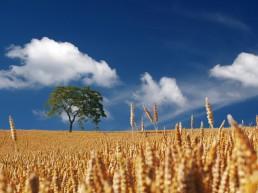 Préservation de terres nourricières de proximité de la vallée de la Lys